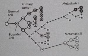 Clonal evolution of cancer